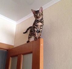 With kitten-like bravery, you could accomplish anything. | 23 Pictures Of Kittens To Remind You That Good Things Exist