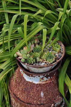Succulents on a rusty old milk can - great ideas in this garden eclecticallyvintage.com