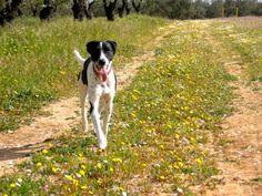 Adopta a Mickey ( Mestizo ) - #adopta #perros