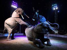 sloni-cirkus-7879_denik-630.jpg (630×473)