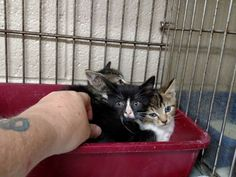 Bitsy kittens (3)  -- saved!