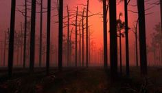 Sunset Digital Blasphemy Wallpaper HD Fog Forest 1024x768px Resolution