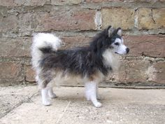 """A needle felted Alaskan Malamute called """"Umak."""" The rough, under belly and tail were felted with the dog's own fur."""