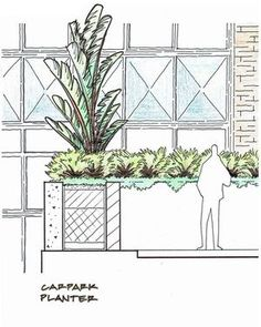 #outdoorestablishments - A concept sketch detail from our current project in Darling Point. The proposed planting was inspired by the mid-century architecture of the apartments and nearby McKell Park.