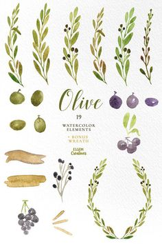 Watercolor Olive Branch Clipart Leaves Clipart by EssemCreatives