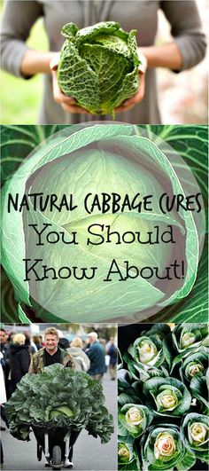 Cabbage has been used as a folk remedy for hundreds of years. Check out just a few of the many uses for cabbage known for its healing properties.