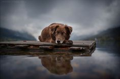 120815-Photographer-Captures-Soulful-Portraits-Of-Dogs-19