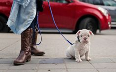 Spanish Village Returns Dog Poop to Owners Who Didn't Pick it Up