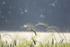 Fields of natural  by mandy goodall