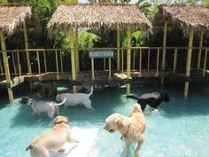 Paradise Ranch Pet Resort Unveils First Ever Water Park for Dogs Shelter Dogs, Animal Shelter, Animal Rescue, Hotel Pet, Dog Kennel Designs, Kennel Ideas, Pet Shop, Pet Paradise, Pet Boarding