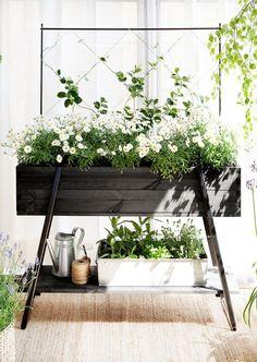 black wood planter