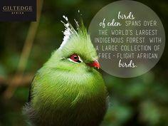 Garden Route | Birds of Eden