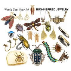 Polyvore Insect Jewelry