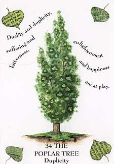 Tree Magick - The Poplar Tree Wiccan Spells, Magick, Witchcraft, Herbal Witch, Poplar Tree, Plant Magic, Native American Quotes, Cedar Trees, Celtic Tree