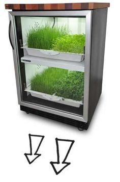 The Kitchen Cultivator, pricey (starting at $2200), but such a cool way to have fresh herbs & greens!