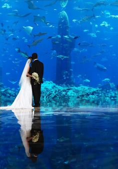 The Atlantis Honeymoon Registry and Wedding Registry. Any part of your honeymoon at Atlantis can be a wedding gift. It is free to set up your registry with the Atlantis Honeymoon Registry. Wedding Album, Wedding Pics, Wedding Venues, Wedding Ideas, Wedding Things, Wedding Bride, Wedding Stuff, Wedding Cakes, Wedding Dresses