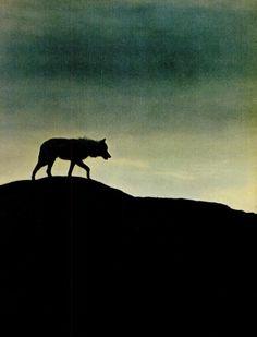 lone wolf.