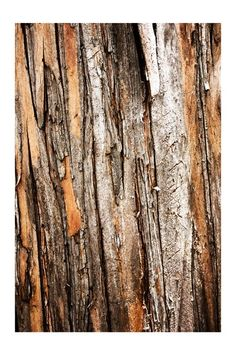 I chose this photo because the photographer paid much attention to the photo to present to the viewer each crevice and crack within the tree bark