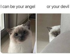 Funny Animal Images, Funny Animal Jokes, Cute Funny Animals, Animal Memes, Funny Cute, Cute Cats, Funny Pictures, Pictures Of You, Really Funny Memes