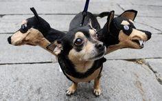 extreme halloween costume ideas on Funny Dog Halloween Costume Ideas