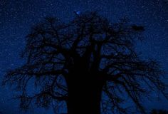 Passionate about photography? I am - 3:30am wake up calls for moon down stars are bright shots against the Baobob Tree.  The hotel staff (Jacob) walked the mile with us to make sure we weren't eaten by hyenas! He did this two mornings in a row!  Can you imagine asking the front desk clerk at your local motel 6 to go out at 3:30am with you? :)