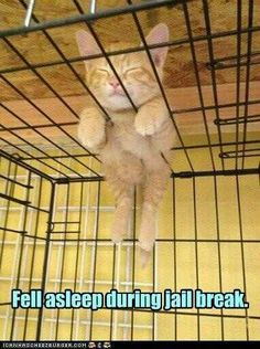 Funny Animal Pictures - View our collection of cute and funny pet videos and pics. New funny animal pictures and videos submitted daily. Animals And Pets, Baby Animals, Funny Animals, Cute Animals, Funniest Animals, Funny Horses, Wild Animals, Cute Kittens, Cats And Kittens