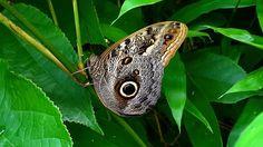 22 de mayo. Día Internacional de la Diversidad Biológica.  En #Venezuela contamos con una gran cantidad y variedad de fauna y flora que nos hace privilegiados en el mundo Mariposa en el Parque de la Exótica Flora Tropical  Publicado por @ktqmene