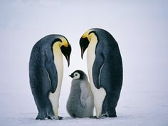 Penguin Family- Image to Paint