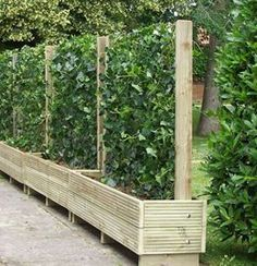 alternative to fences. Would be great for a vegetable garden when you only have a little space with sun. living fence- keep the chickens from the garden #gardenvinesfence #vegetablegardeningideasfenced