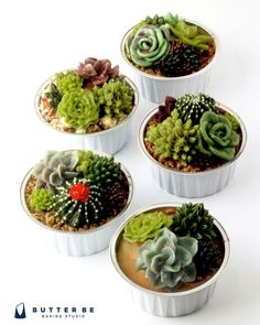 Buttercream cupcakes... These look like real succulents!