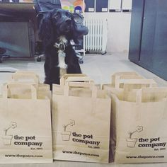 Barnaby desperately wanting to know what is inside our gift bags!