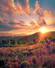 May all your mornings be this beautiful. Lovely sunrise over a field of pretty pink and purple flowers. Blue sky with some puffy clouds. I want to be lying in this meadow right now! Beautiful World, Beautiful Images, Skier, All Nature, We Are The World, Beautiful Sunrise, Am Meer, Pretty Pictures, Beautiful Landscapes