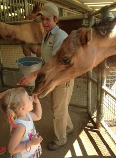 Hattie having fun feeding a camel at San Diego Zoo