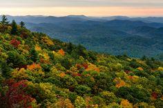 foto de 107 meilleures images du tableau Forêt | Foret, Paysage et Nature ...