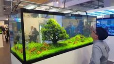 Is this not the coolest freshwater aquascape ever created!? Truly unique and…