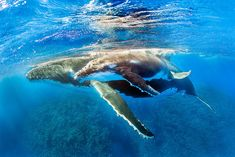 Whale, Sea, Gallery, Photography, Animals, Tights, Whales, Photograph, Animales