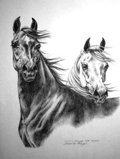 Horse by Laura Hardie ? Horse Pencil Drawing, Horse Drawings, Animal Drawings, Art Drawings, Pretty Horses, Horse Love, Beautiful Horses, Animals Beautiful, Horse Sketch