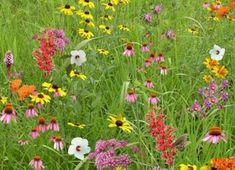 Pollinator Conservation Mix A biodiversity garden is a native plant pollinator