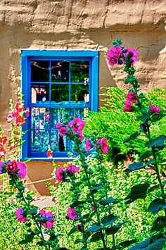 hollyhocks New Mexico