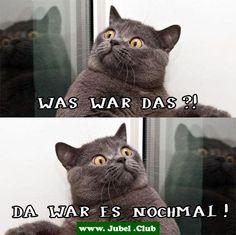 Paranoide Katze ist paranoid