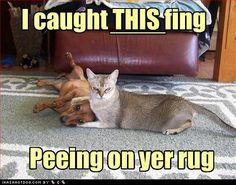 I caught this fing...peeing on yer rug