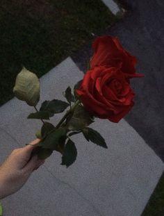 low priced 6ebd9 3ec98   〄   𝚋𝚎𝚝𝚛𝚊𝚢𝚘𝚘𝚗𝚐𝚒 Älskar Blommor, Vackra Blommor, Röda Rosor,  Estetiska Bakgrundsbilder,