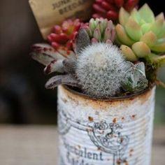 Tin can succulent gardening Succulent Gardening, Succulent Terrarium, Container Gardening, Garden Plants, Indoor Plants, House Plants, Succulents In Containers, Cacti And Succulents, Planting Succulents
