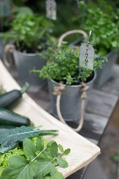 thyme planted in rope planter with stake and label from target in outdoor garden / sfgirlbybay Herbs, Plants, Garden, Country Gardening, Herb Garden, Little Garden, Edible Garden, Outdoor Gardens, Container Gardening
