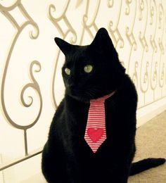 Cat necktie--now if only I could send them to work...