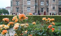 It is not just the red rose that has a spot in the garden. We particularly like these beautiful roses.  Copyright: Rosenborg Castle / Rosenborg Slot
