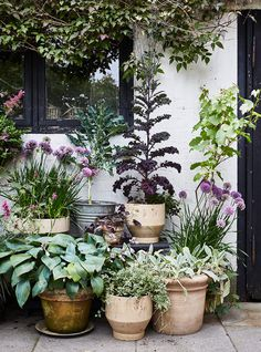 Urban Garden If you only have a small garden courtyard or balcony experimenting with container gardening is worth a thought. Garden If you only have a small garden courtyard or balcony experimenting with container gardening is worth a thought. Lake Garden, Backyard Garden Design, Garden Cottage, Small Garden Design, Dream Garden, Backyard Landscaping, Small Back Garden Ideas, Small Garden Inspiration, Garden Bar