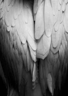 I love the part of Maximum Ride where max wraps her wings around Angel and Nudge. And they just sit inside her canopy of feathers. Angels Among Us, Angels And Demons, 7 Archangels, Your Guardian Angel, I Believe In Angels, Ange Demon, Foto Art, Angel Art, Winter White