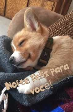 Corgi, Humor, Animals, Good Night Msg, Good Morning Quotes, Nature Photography, Scrapbooks, Good Morning Messages, Good Afternoon