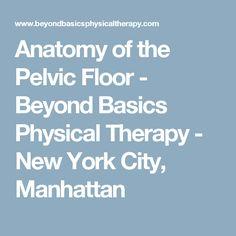 Anatomy of the Pelvic Floor - Beyond Basics Physical Therapy - New York City, Manhattan